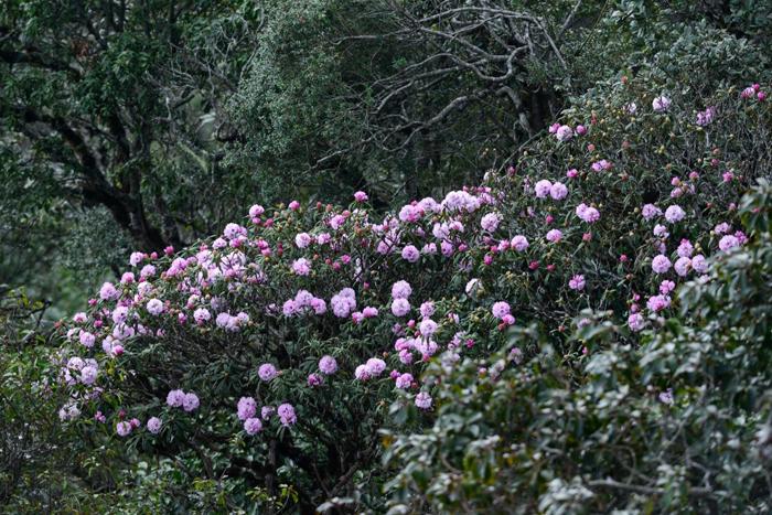 Rực rỡ ngàn hoa tại Fansipan Legend