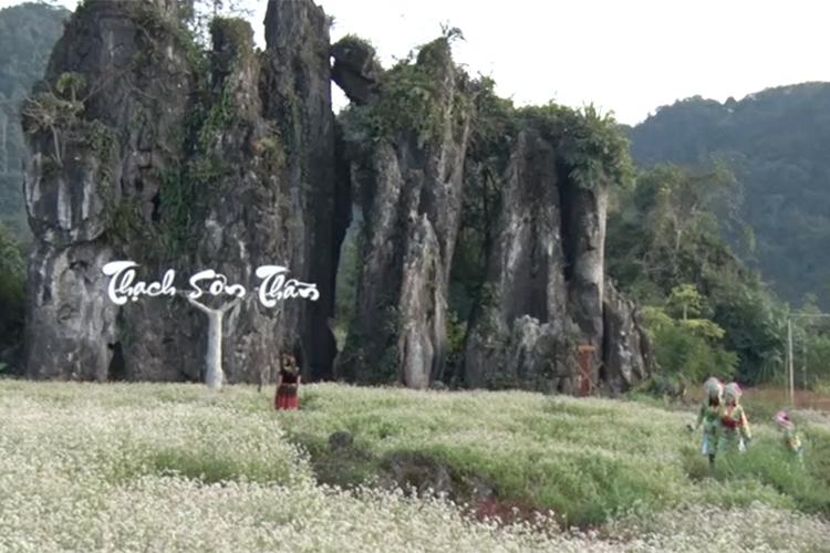 Hoa Tam giác mạch níu chân du khách