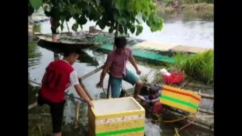 """Thừa Thiên Huế: Người dân """"khóc ròng"""" khi hàng chục tấn cá nuôi bị chết"""