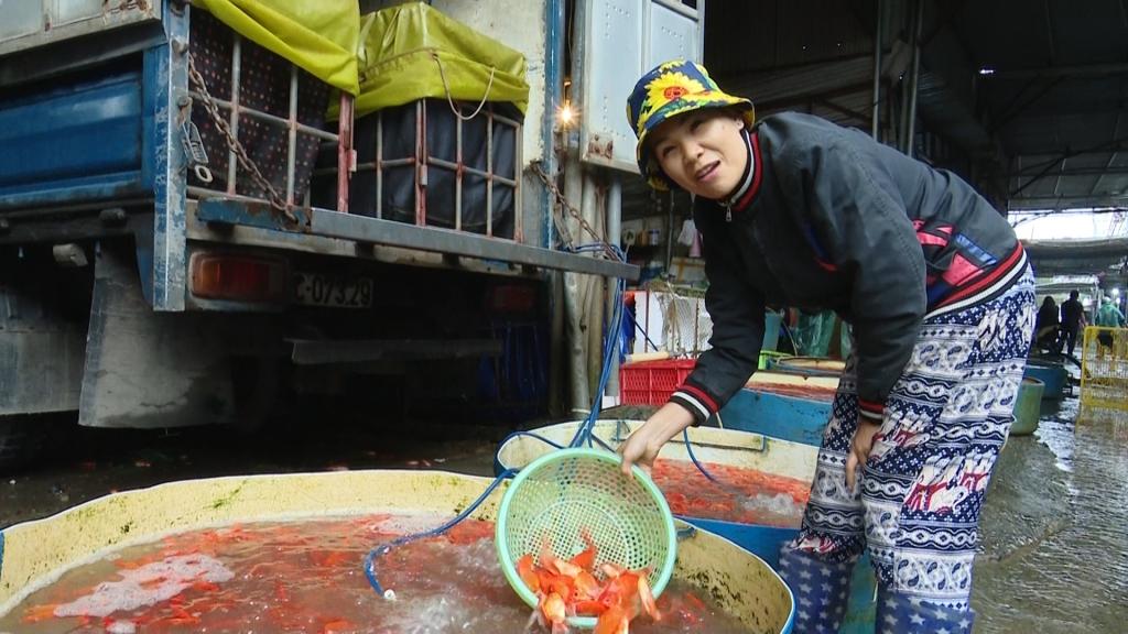 Chợ cá lớn nhất miền Bắc hối hả vào vụ bán cá chép cúng ông Công ông Táo