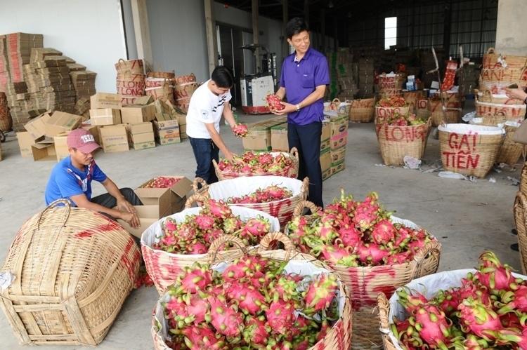 Xuất khẩu nông sản bền vững: Cần tính những giải pháp dài hạn!