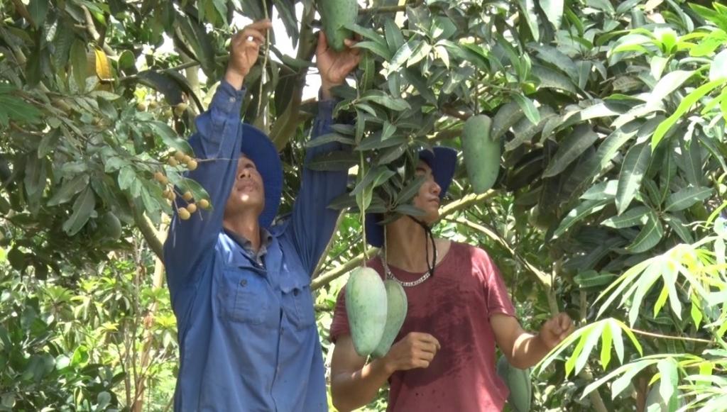 Xuất khẩu nông sản Sơn La: Hướng đi tất yếu